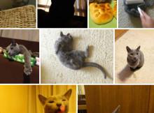 Cat-Gallery